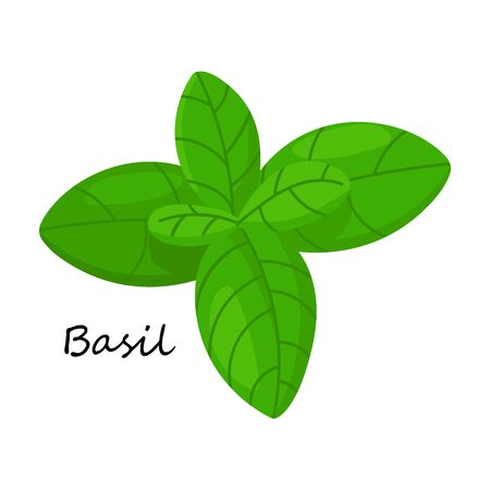 Basil vector icon.Cartoon vector icon isolated on white background basil .