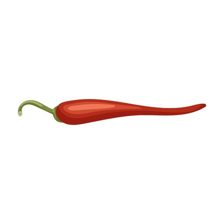 Spicy pepper vector icon.Cartoon vector icon isolated on white background spicy pepper . 向量圖像