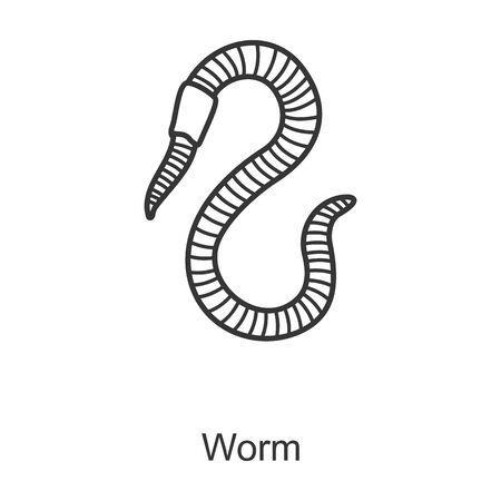 Worm vector icon.Line vector icon isolated on white background worm.