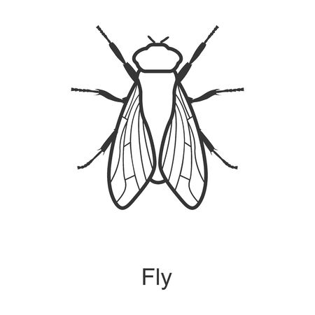 Fly vector icon.Line vector icon isolated on white background fly.