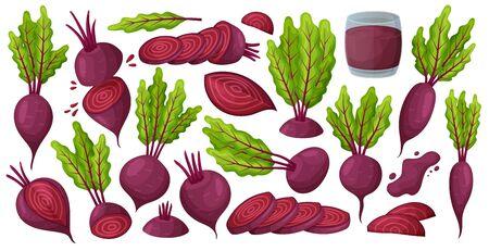 ビートベクター漫画セットアイコンの野菜。白い背景にベクトルイラストビートルートルート.孤立した漫画は、ビートのアイコンの食べ物を設定します。