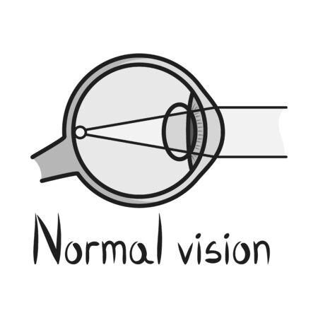 Vector illustration of eyeball and organ sign. Graphic of eyeball and eyesight stock vector illustration. Illustration