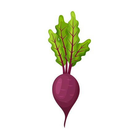Beetroot vector icon.Cartoon vector icon isolated on white background beetroot . Stock fotó - 137501901