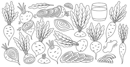 Vegetable of beet vector line set icon. Vector illustration beetroot root on white background .Isolated line set icon food of beet. Illusztráció