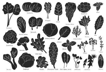 Vegetable lettuce black vector icon.Illustration of isolated black icon vegetable salad . Vector illustration set lettuce leaf and cabbage.