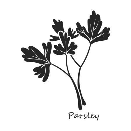 Parsley vector icon.Black,simple vector icon isolated on white background parsley.