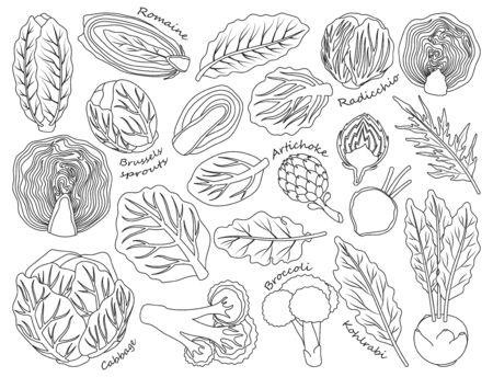 Kohl Salat Vektor Umriss, Linie Symbol gesetzt. Vektor-Illustration Set Gemüsenahrung. Isolierte Gliederung, Symbol Leitung Kopfsalat auf weißem Hintergrund.