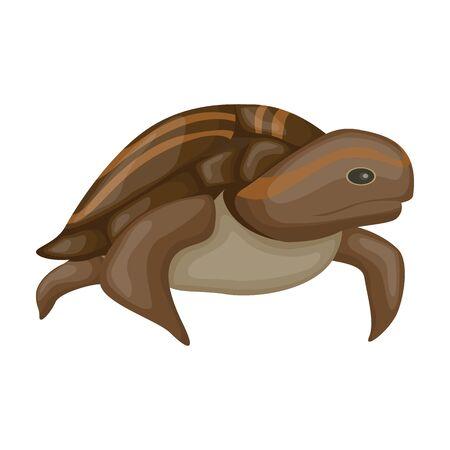 Sea turtle vector icon.Cartoon vector icon isolated on white background sea turtle. Illustration