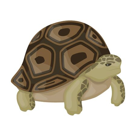 Icono de vector de tortuga marina Icono de vector de dibujos animados aislado sobre fondo blanco Tortuga de mar. Ilustración de vector