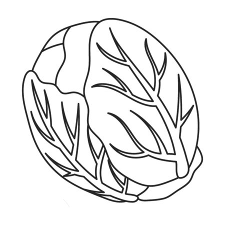 Cabbage vector icon.Outline,line vector icon isolated on white background cabbage.