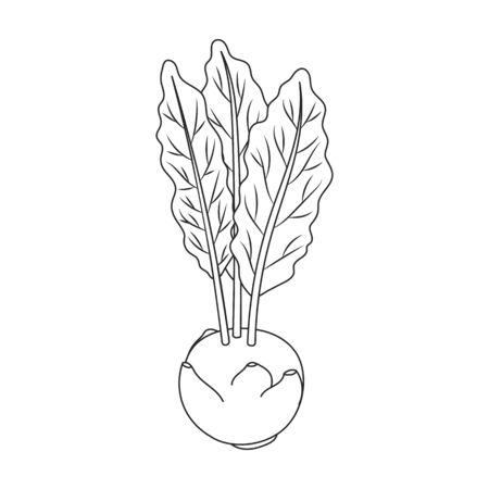Cabbage of kohlrabi vector icon.Outline,line vector icon isolated on white background cabbage of kohlrabi . Stock Illustratie