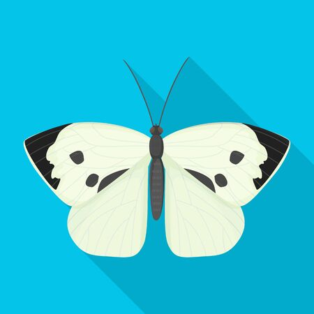 Butterfly vector icon.Flat vector icon isolated on white background butterfly .