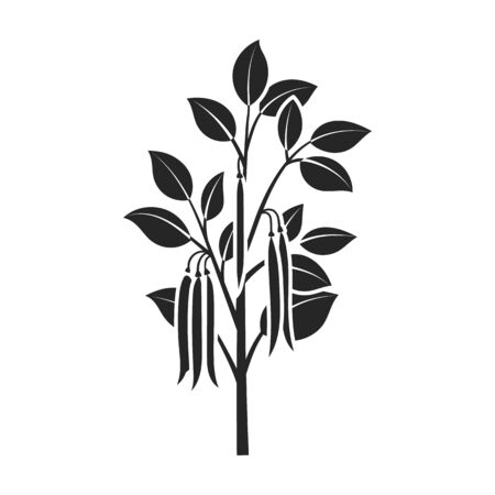 Plant of bean vector icon.Black vector isolated on white background plant of bean .