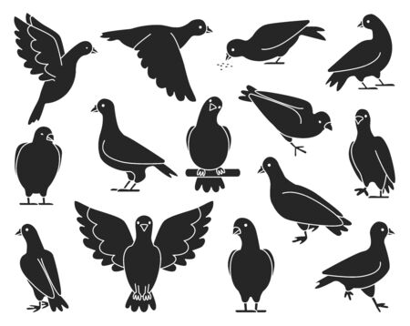 Pigeon of peace black vector illustration on white background.Vector illustration set icon dove of bird .Isolated set black icon pigeon.