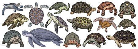 Sea turtle vector cartoon set icon. Vector illustration tortoise on white background. Isolate cartoon set icons sea turtle. Vektoros illusztráció