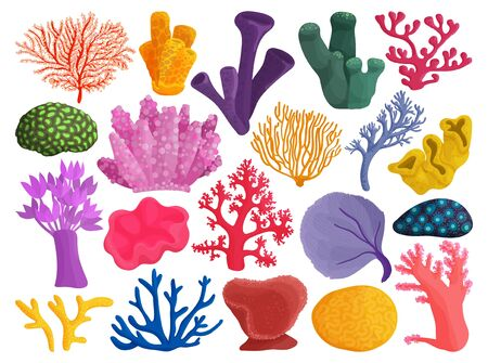 Sea coral vector illustration on white background. Vector cartoon set icon seaweed. Isolated cartoon set icons sea coral.