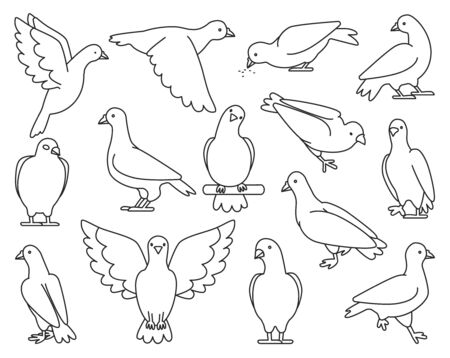 Pigeon of peace outline vector illustration on white background.Vector illustration set icon dove of bird .Isolated set outline icon pigeon.