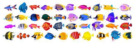 Tropical fish vector cartoon icon. Isolated cartoon icon aquarium animals .Vector illustration tropical fish on white background.