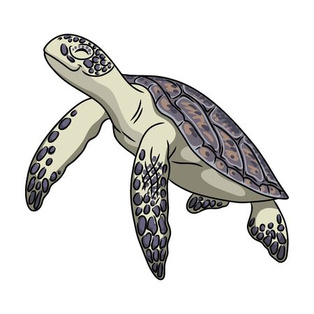 Turtle vector icon.Cartoon vector icon isolated on white background turtle.