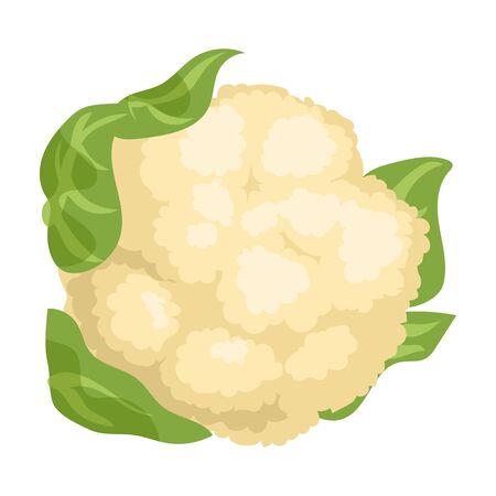 Cauliflower vector icon.Cartoon vector icon isolated on white background cauliflower.