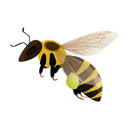 Honey bee vector icon.Cartoon vector icon isolated on white background honey bee.