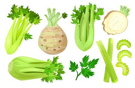 Celery isolated cartoon set icon. Vector cartoon set icons vegetable. Vector illustration celery on white background.