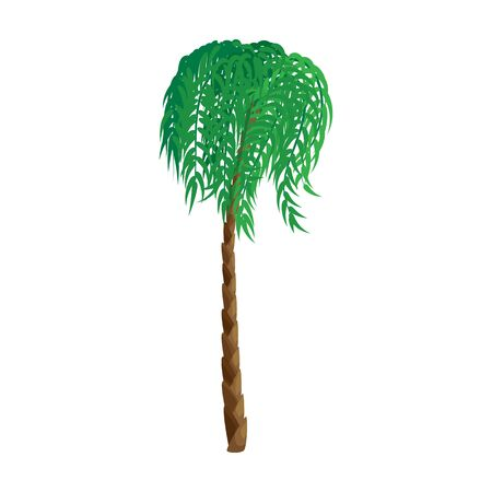Palm tree vector icon.Cartoon vector icon isolated on white background palm tree.