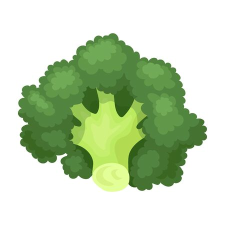 Broccoli vector icon.Cartoon vector icon isolated on white background broccoli.