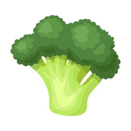 Broccoli vector icon.Cartoon vector icon isolated on white background broccoli.