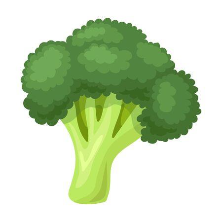 Broccoli vector icon.Cartoon vector logo isolated on white background broccoli.