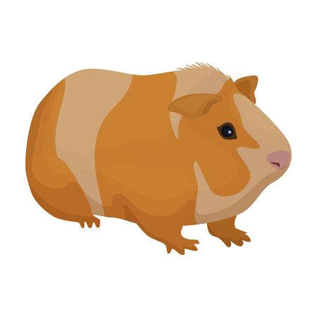 Cavy vector icon.Cartoon vector icon isolated on white background cavy.