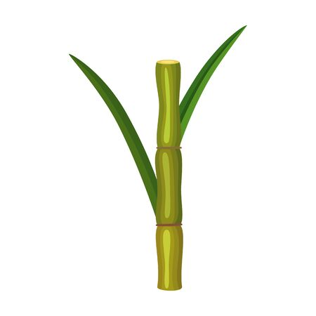 Stem sugar cane vector icon.Cartoon vector icon isolated on white background stem sugar cane.