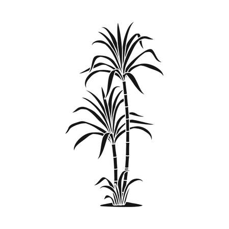 Vector design of palm and cane sign. Web element of palm and field vector icon for stock.