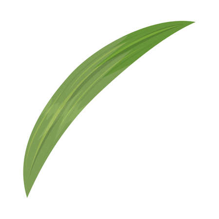Isolated object of leaf and palm sign. Web element of leaf and cane stock symbol for web.
