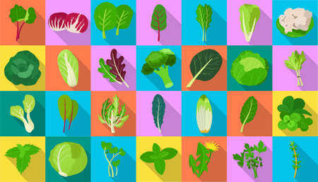 Vegetable lettuce flat vector icon.Illustration of isolated flat icon vegetable salad . Vector illustration set lettuce leaf and cabbage. Ilustração