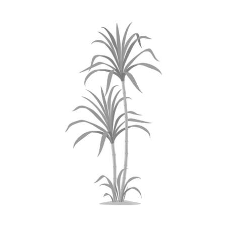 Vector illustration of palm and cane symbol. Web element of palm and field stock symbol for web. Çizim