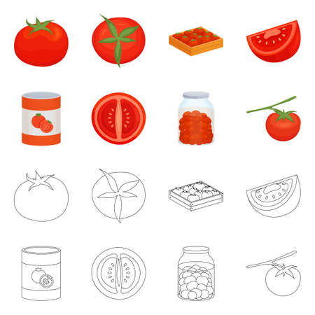 Vector illustration of vegetable and delicious icon. Collection of vegetable and natural stock symbol for web.