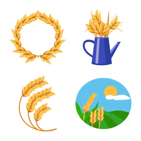 Isolated object of grain and harvest symbol. Collection of grain and ear stock vector illustration. Illustration
