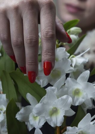 stylishly folded female hands with red manicure on a white flower background