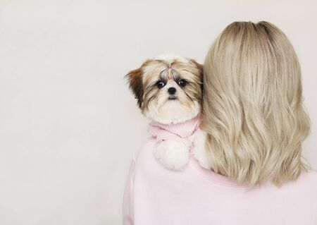 shih tzu puppy sitting on the blond shoulder, pink clothes.