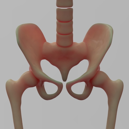 pelvis: Human Hip and Pelvis Stock Photo