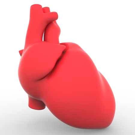 ventricle: Heart