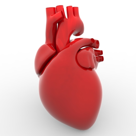 ventricle: Human Heart