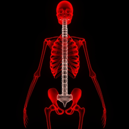 the cord: Spinal cord Stock Photo