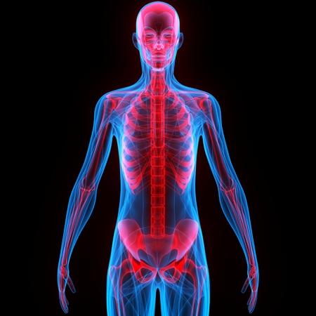 Menschlicher Körper Knochen Gelenkschmerzen Anatomie (Ellbogengelenk ...