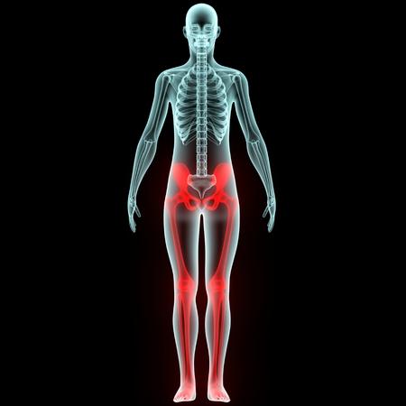인체 뼈 관절 통증 해부학 (하체)