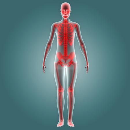 인체 뼈 관절 통증 해부학