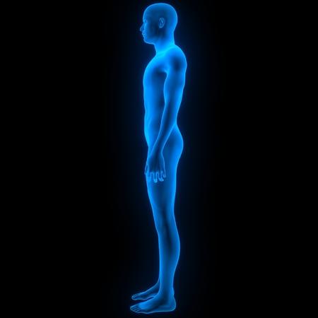 male muscle: Human Male Muscle Body