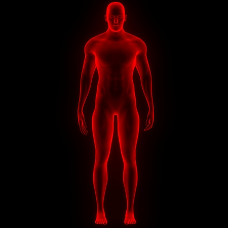 medical man: Human Male Muscle Body