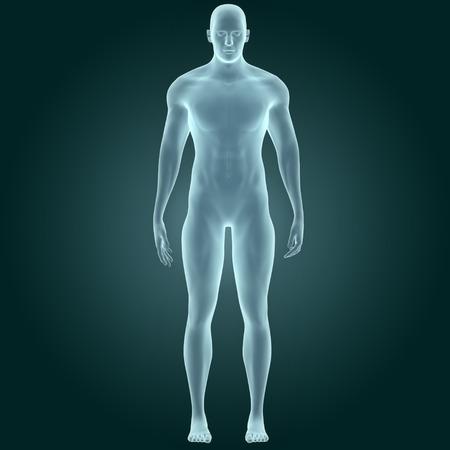 figura humana: Cuerpo humano masculino del músculo Foto de archivo